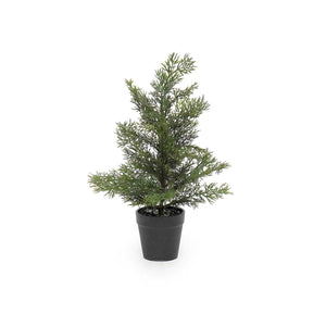 Load image into Gallery viewer, Evergreen Trees in Black Pot *Pickup only*