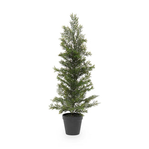 Evergreen Trees in Black Pot *Pickup only*