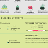 Caring for your succulent