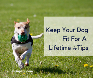 How To Keep Your Dog Fit And Healthy For A Lifetime