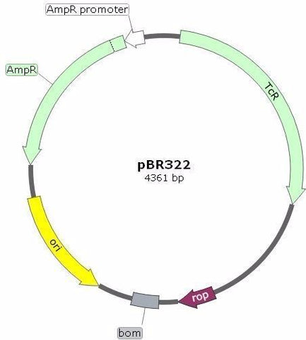 pBR322 Plasmid DNA - Cloning Vector - Ampicillin and Tetracycline Resistant.