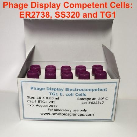 Phage Display TG1 E. coli Cells| Phage Display Library Preparation | Amid Biosciences