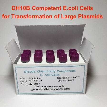DH10B Chemically Competent Cells | Cloning Large Plasmids| Amid Biosciences