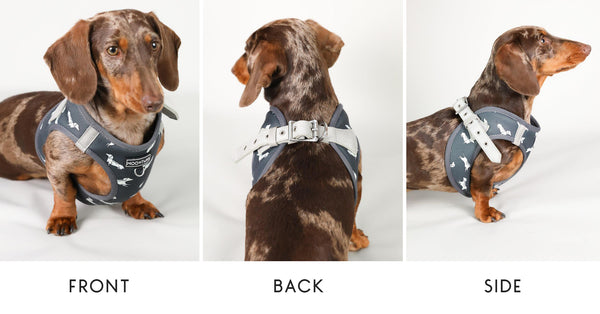 Dachshund Dog Harness - Step In Style