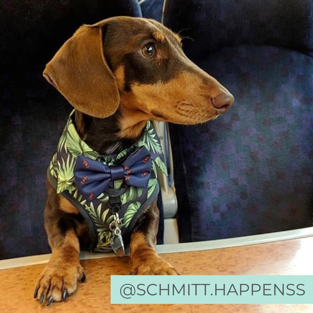 Dog wearing Dog Harness Shirt with tropical print and bow tie