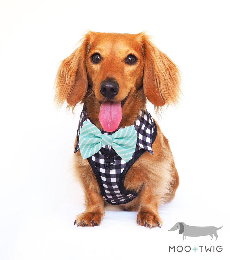 Dachshund Dog wearing Dog Harness Shirt with Gingham Print and Mint Bow Tie