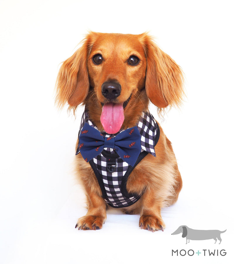 Dachshund Dog wearing Dog Harness Shirt with Gingham Print and Blue Bow Tie. √