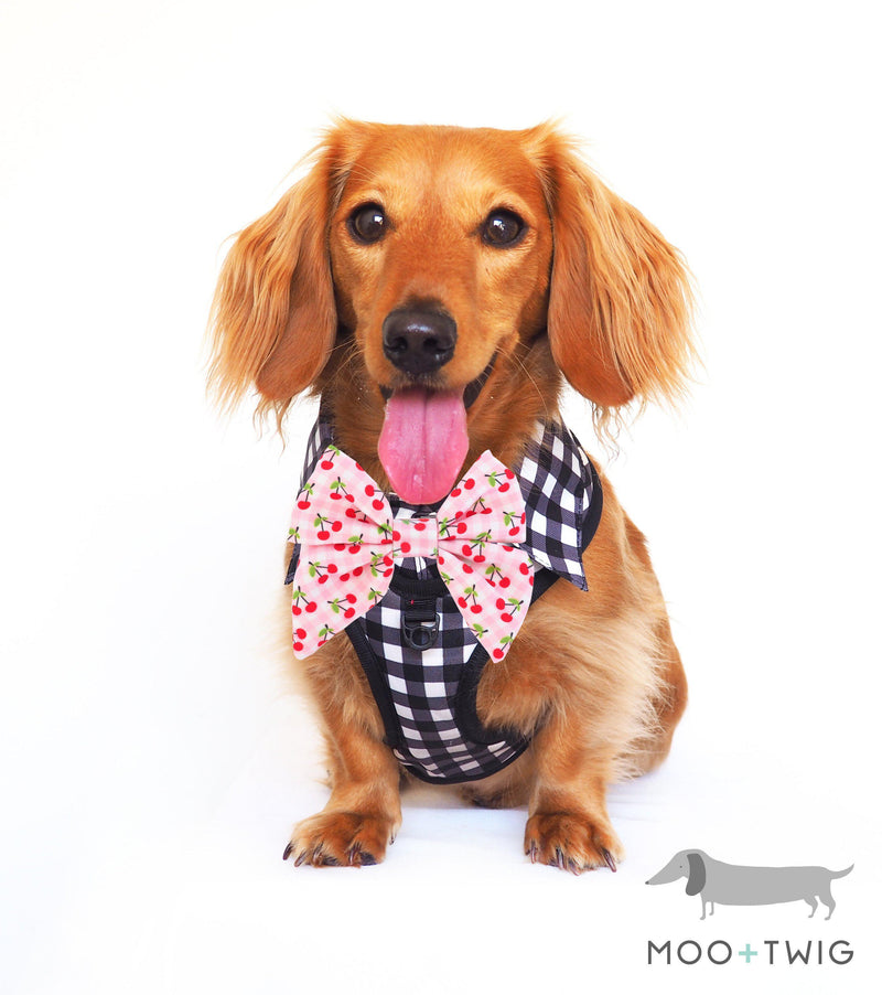 Dachshund Dog wearing Dog Harness Shirt with Gingham Print and Pink Bow Tie. Work and wedding outfit for dogs. Designed in Australia.