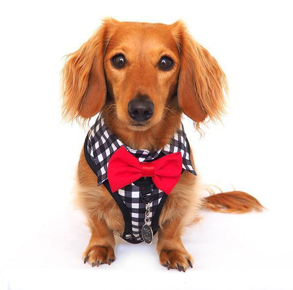 Dog wearing Dog Harness Shirt with Gingham Print and Red Bow Tie. Work and wedding outfit for dogs. Designed in Australia.