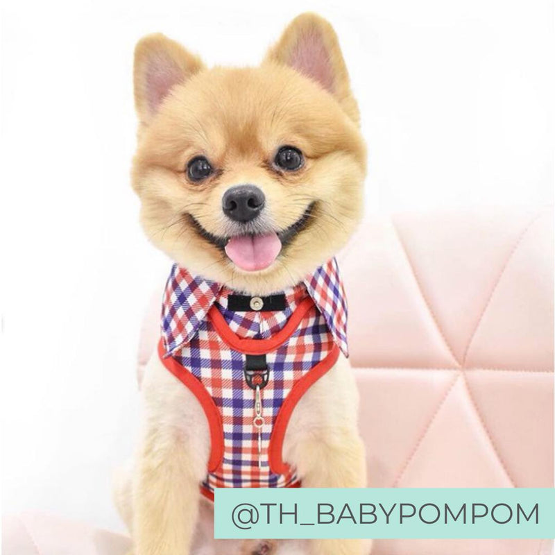Pomeranian wearing Checkered Blue Red White Shirt Dog Harness with Bow Tie Designed in Australia. Work and wedding outfit for dogs.