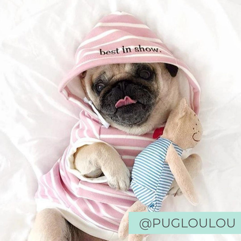 Dog Wearing Pink Striped Dog Hoodie cuddling teddy in bed