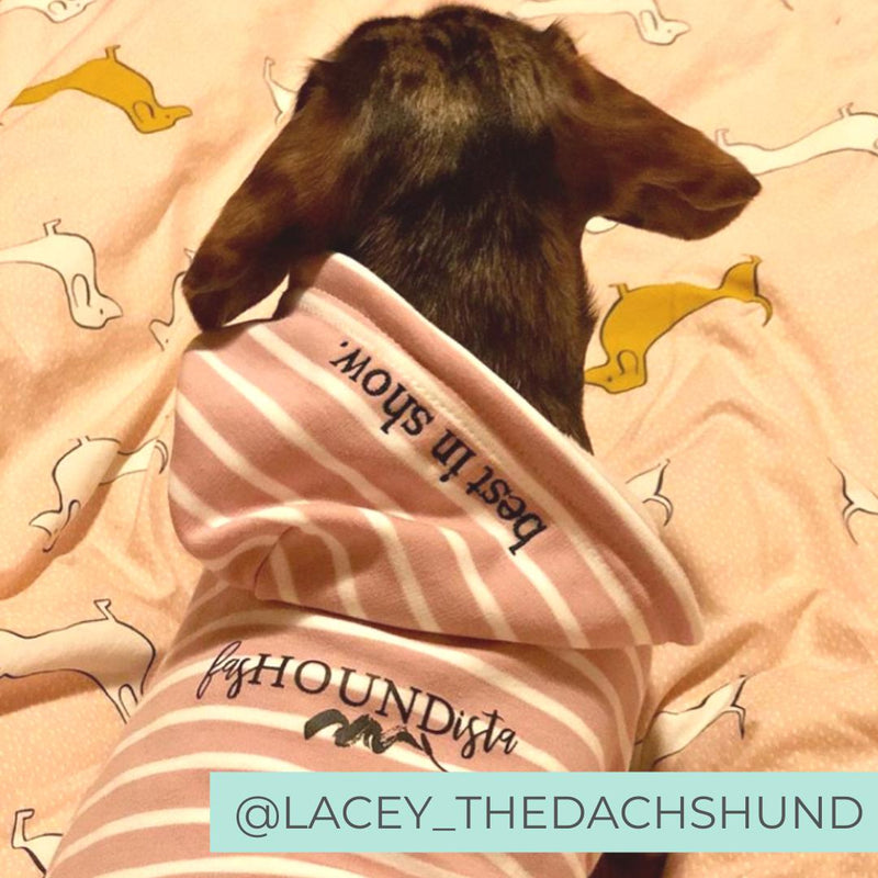 Dog wearing pink best in show comfy dog hoodie in bed
