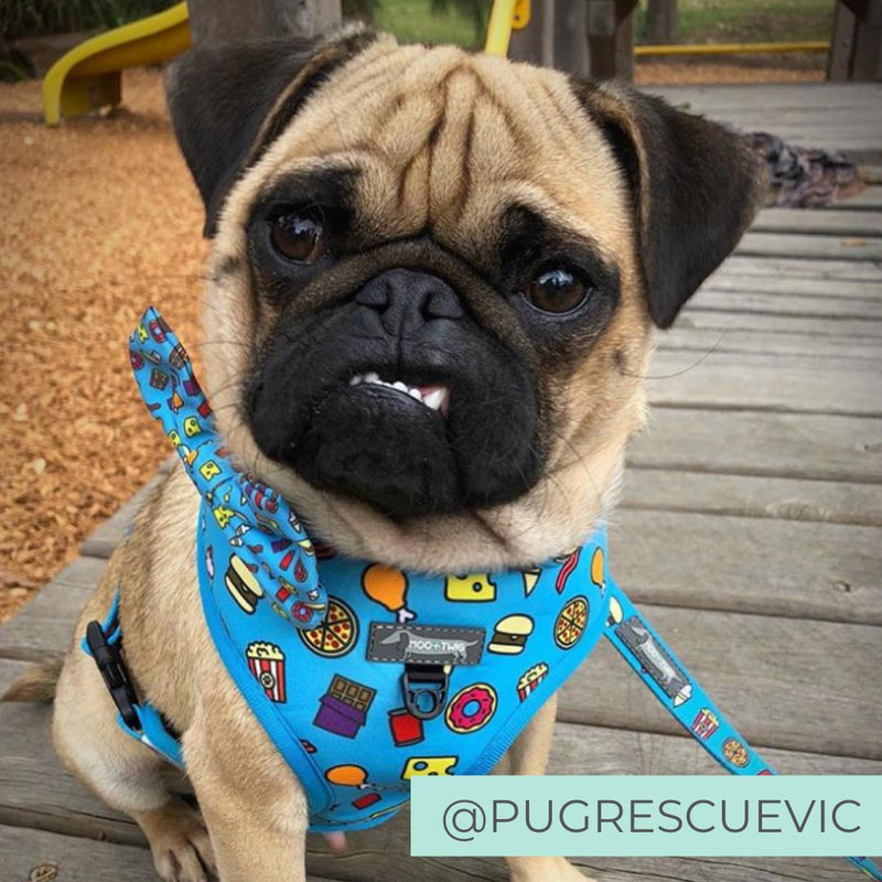 Pug wearing Blue dog harness with junk food and french fries designed in Australia