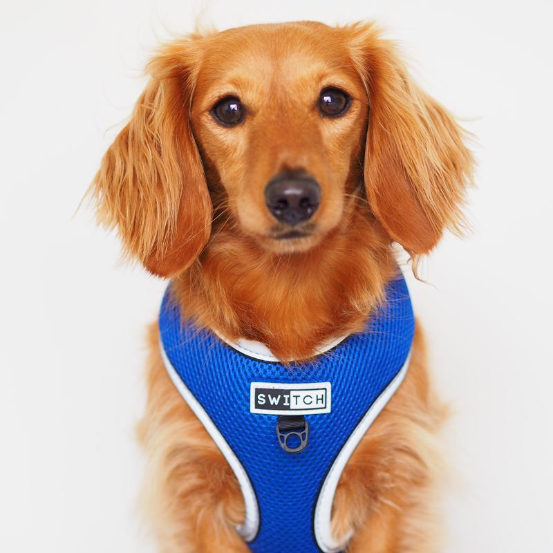 Reversible and Reflective Hi Vis Safety Comfort Dog Harness - Stylish and Comfortable Dog Harness with Safety Features