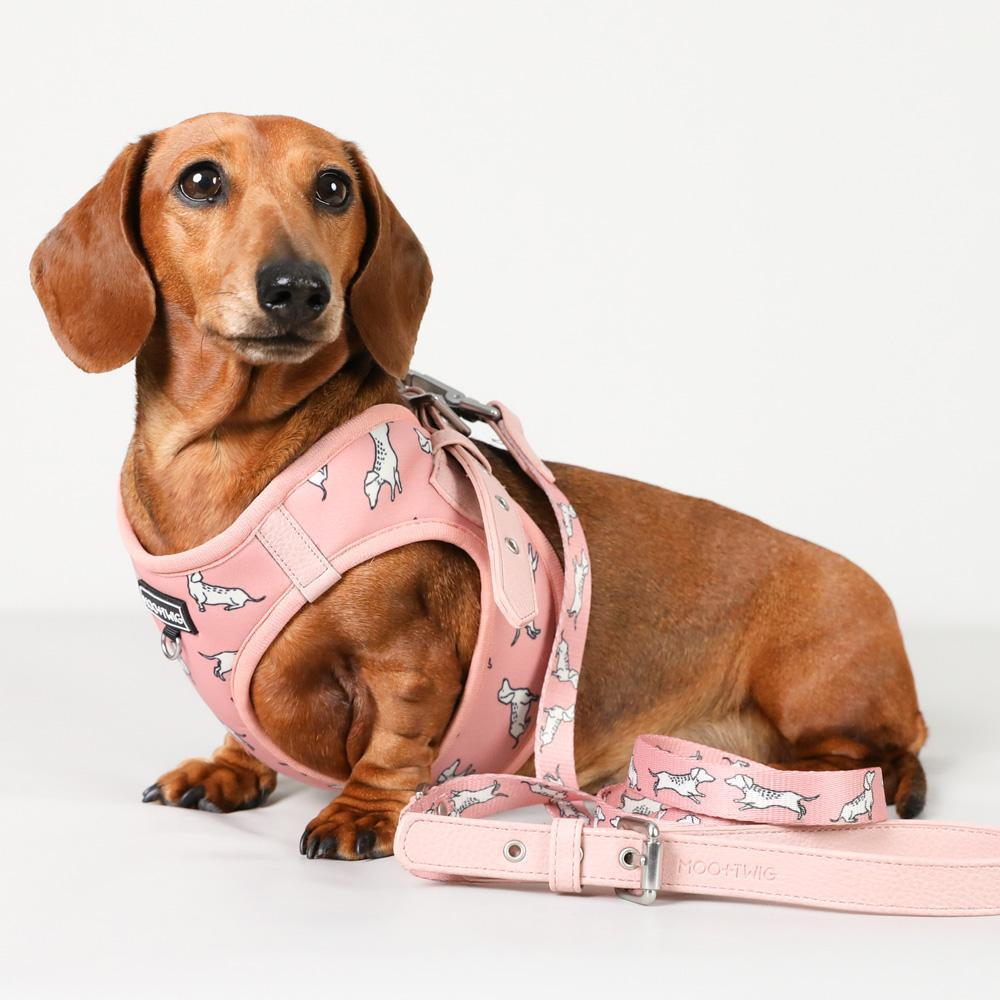 Vegan Leather Dog Leash - Dachshund Dog Leash with Adjustable Handle - Cafe Dog Leash