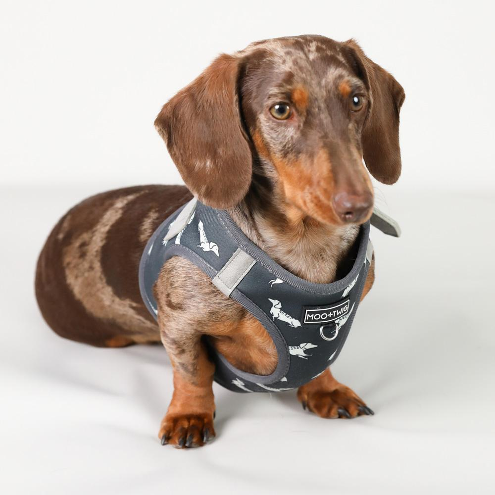 Dachshund step in dog harness, Best harness for dachshunds, Dachshund Harness, Best dachshund harness