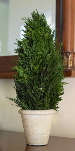Preserved Tuscan Cypress Cone Topiary - 16""