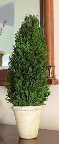 Preserved Tuscan Cypress Cone Topiary - 20""
