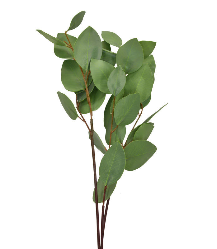 Silver Dollar Eucalyptus Spray 31 Inch