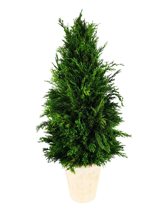 "Emerald Cypress Cone Topiary - 20"" (click for ribbon selection)"