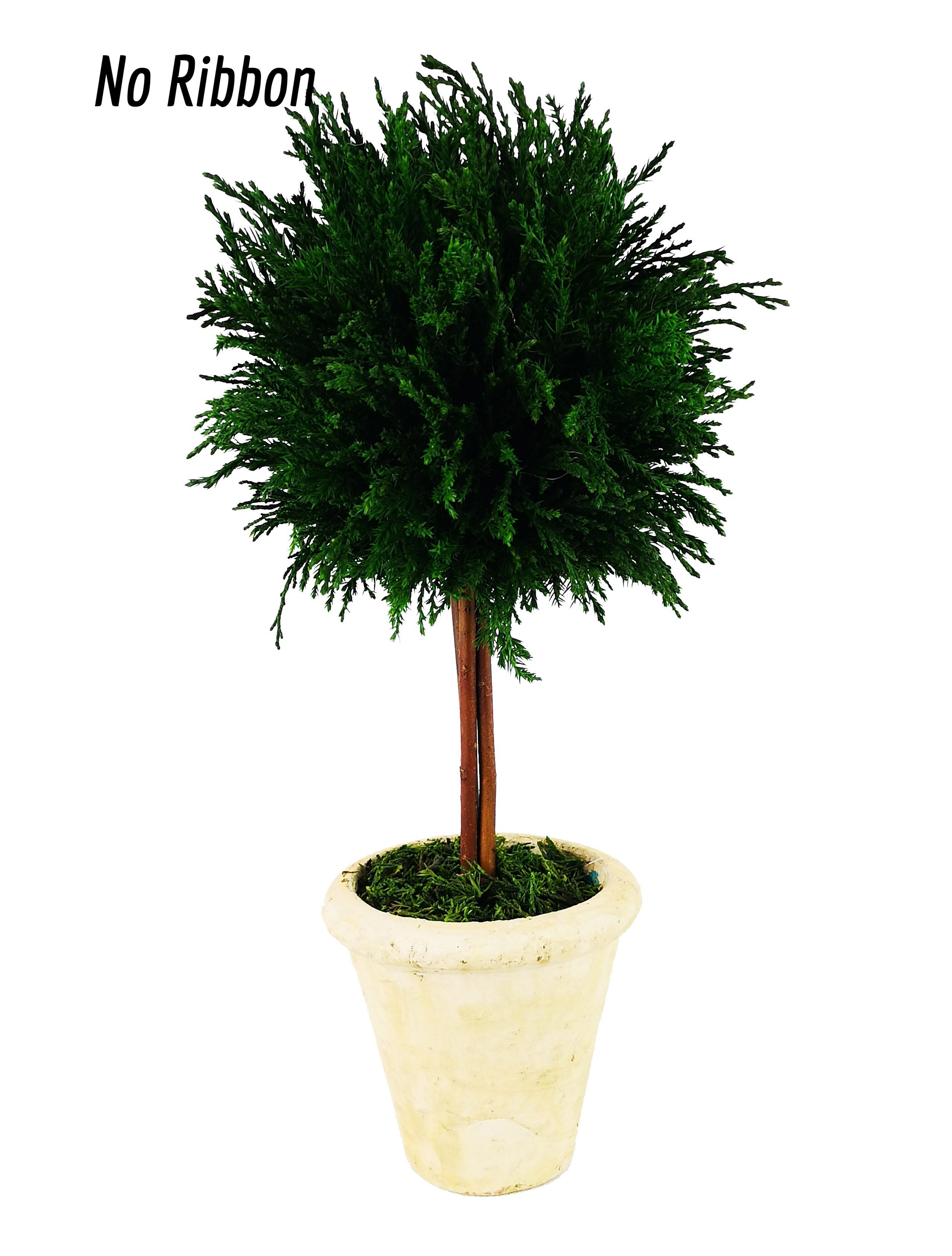Emerald Cypress Ball Topiary 16 Inch