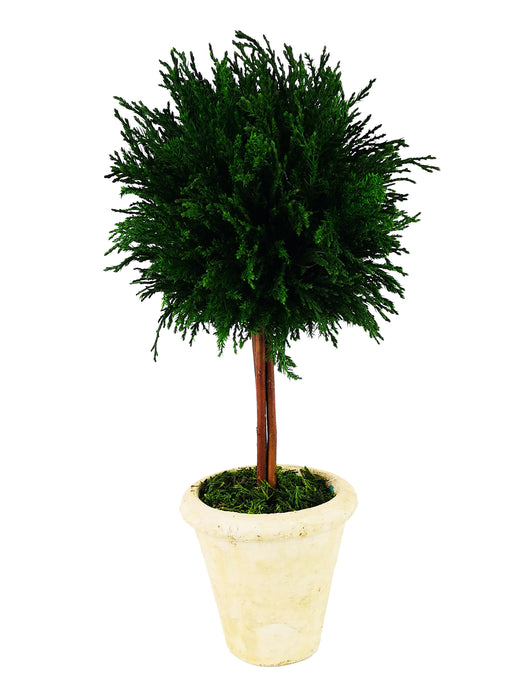 "Emerald Cypress Ball Topiary - 16"" (click for ribbon selection)"