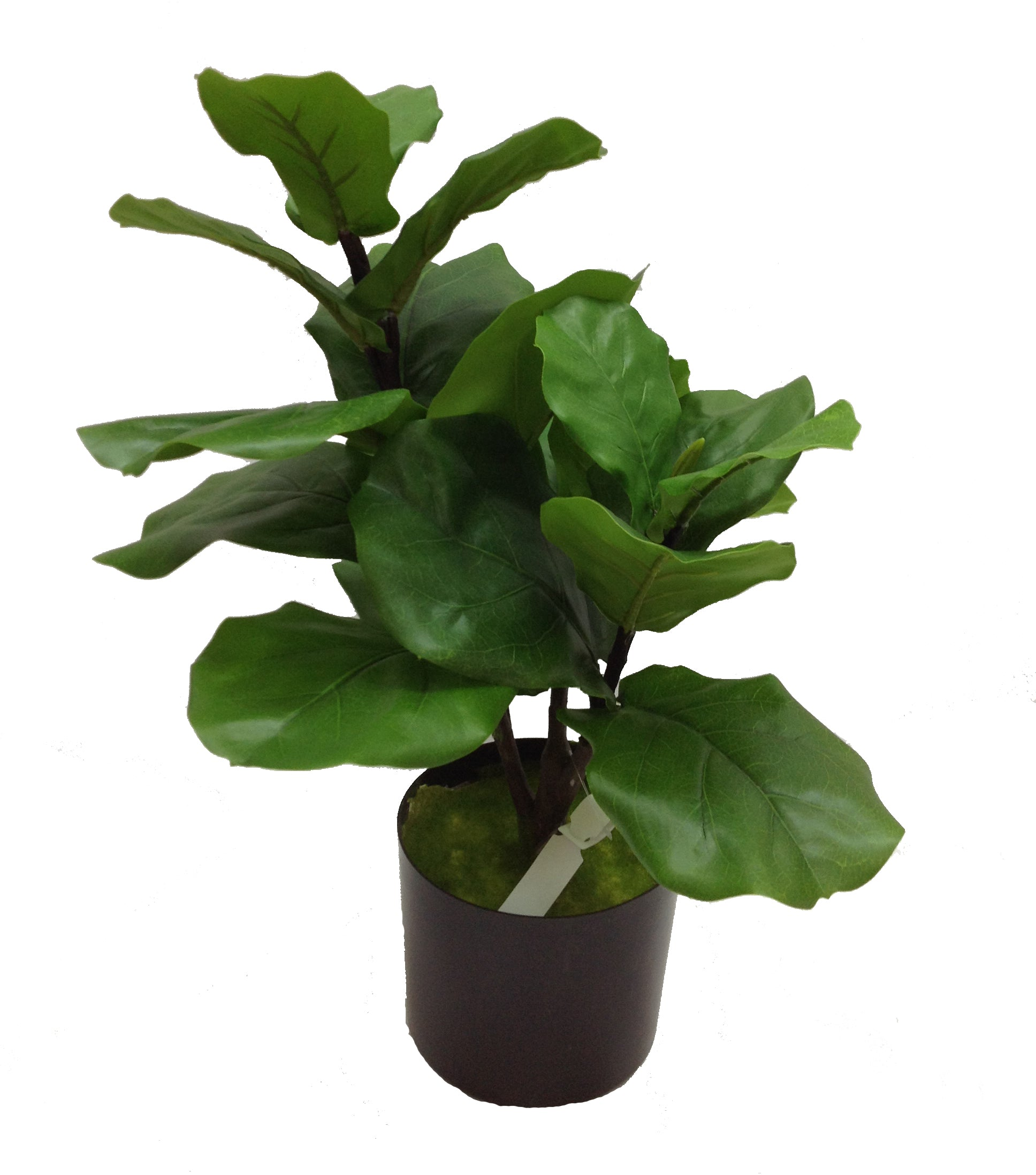 Fiddle Fig Tree 26.5 Inch
