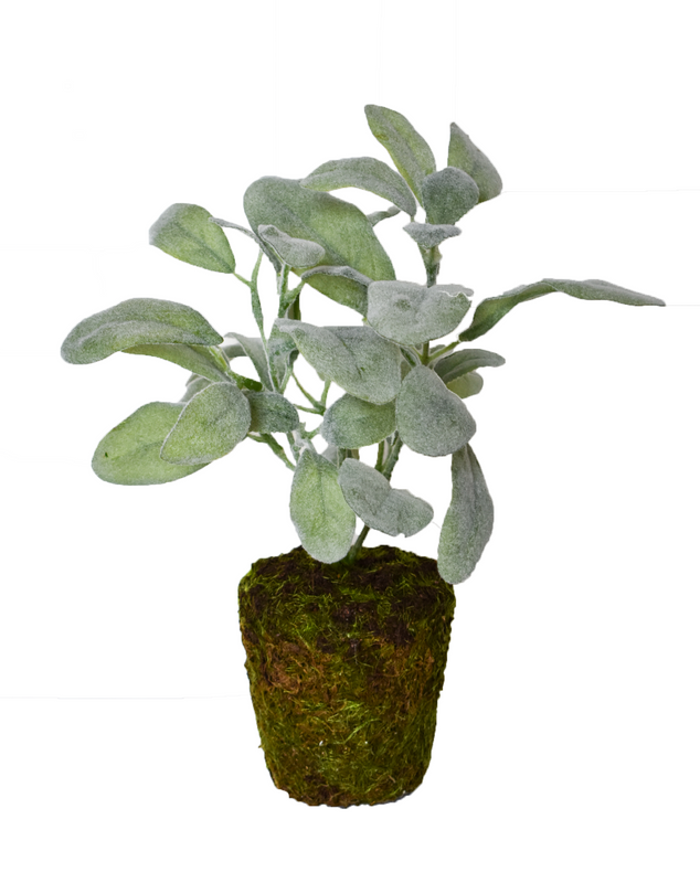 Potted Lambs Ear Topiary