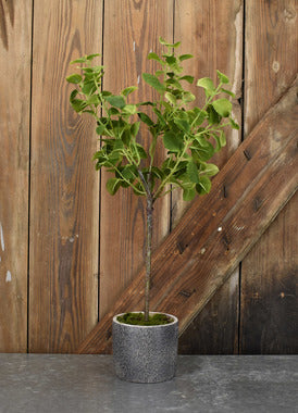 Mint Leaf Pot 23.5""