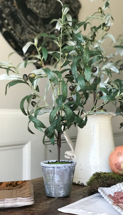 "Olive Tree 24"" Potted"