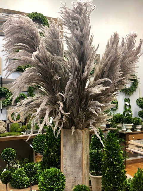 PAMPAS GRASS NATURAL TAUPE APPROX 5'
