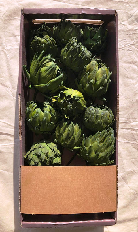 ARTICHOKES-GREEN-DYED-20-PCS