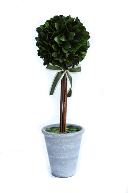 Preserved Laurel Topiary - 21