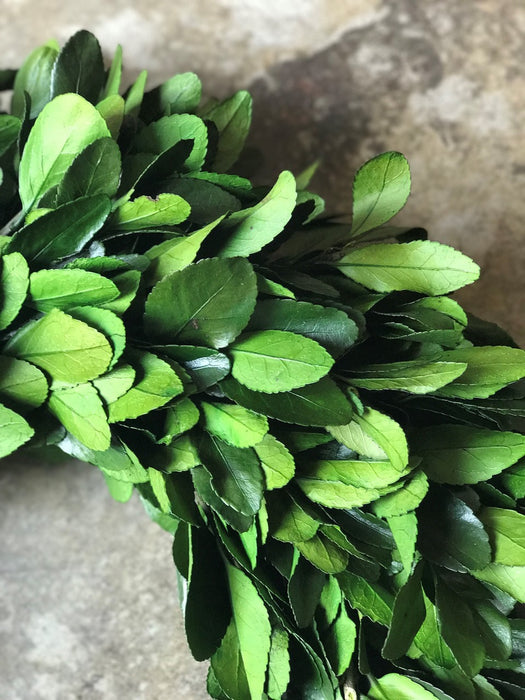 Preserved Laurel Wreath - 17""