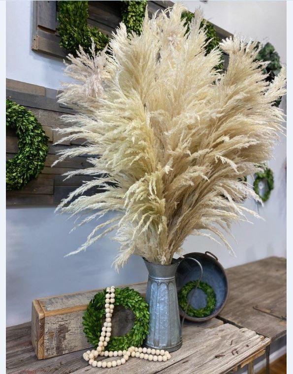 PAMPAS GRASS NATURAL APPROX 5'