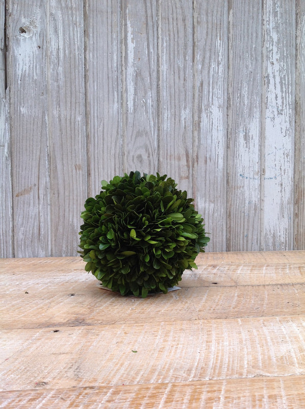 "Preserved Boxwood Ball - 6"" - HOME DECORATIVE ACCENTS - 2"