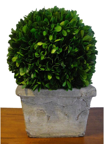 "Preserved Boxwood Ball in Square Pot - 11"" - HOME DECORATIVE ACCENTS - 1"