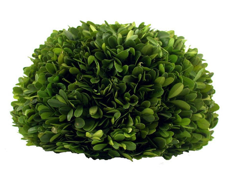 "Preserved Boxwood Half Ball - 10"" - HOME DECORATIVE ACCENTS"