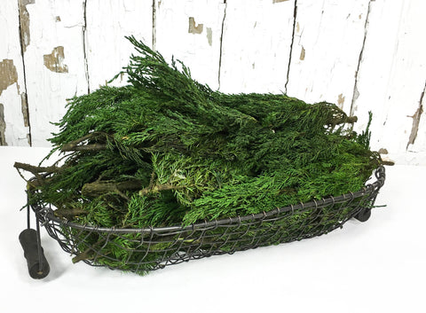Preserved Tuscan Cypress Bulk Branches - 4.4lbs