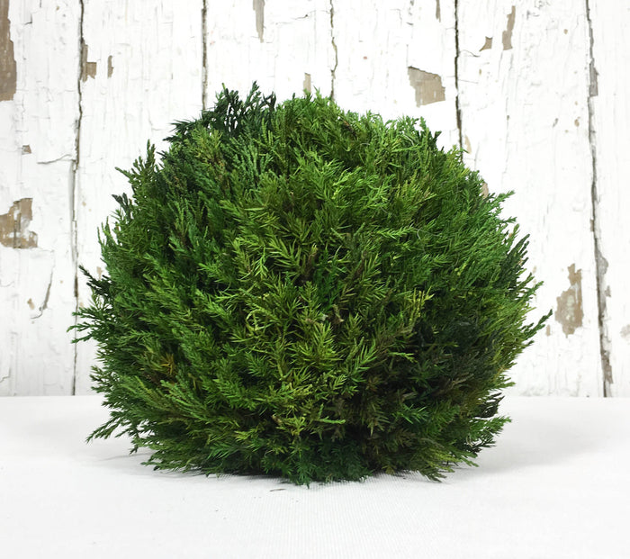 Preserved Tuscan Cypress Ball - 8""