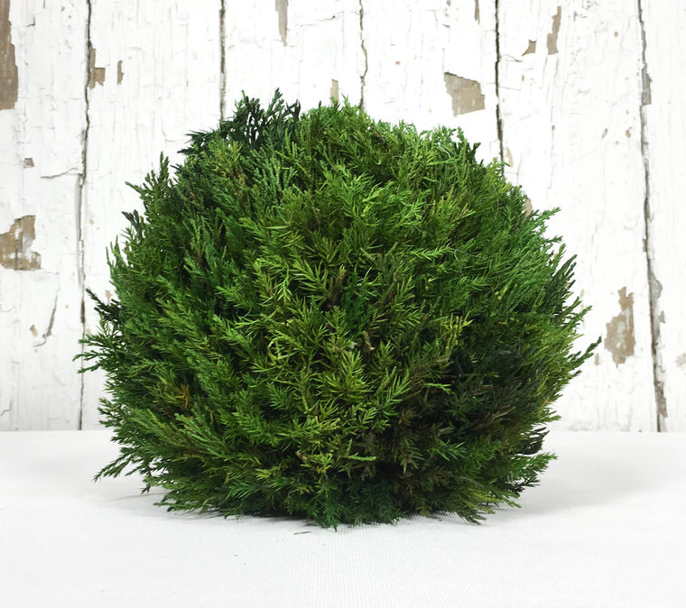 Preserved Tuscan Cypress Ball - 8