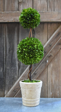 Preserved Boxwood Double Ball Topiary - 30