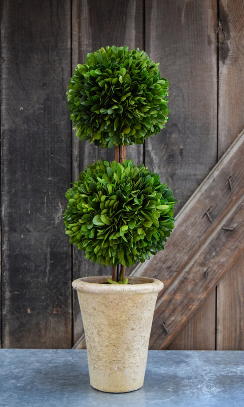 Preserved Boxwood Double Ball Topiary 20 Inch