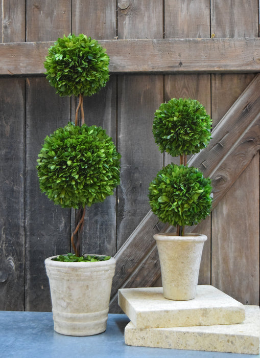 Preserved Boxwood Double Ball Topiary - 30""