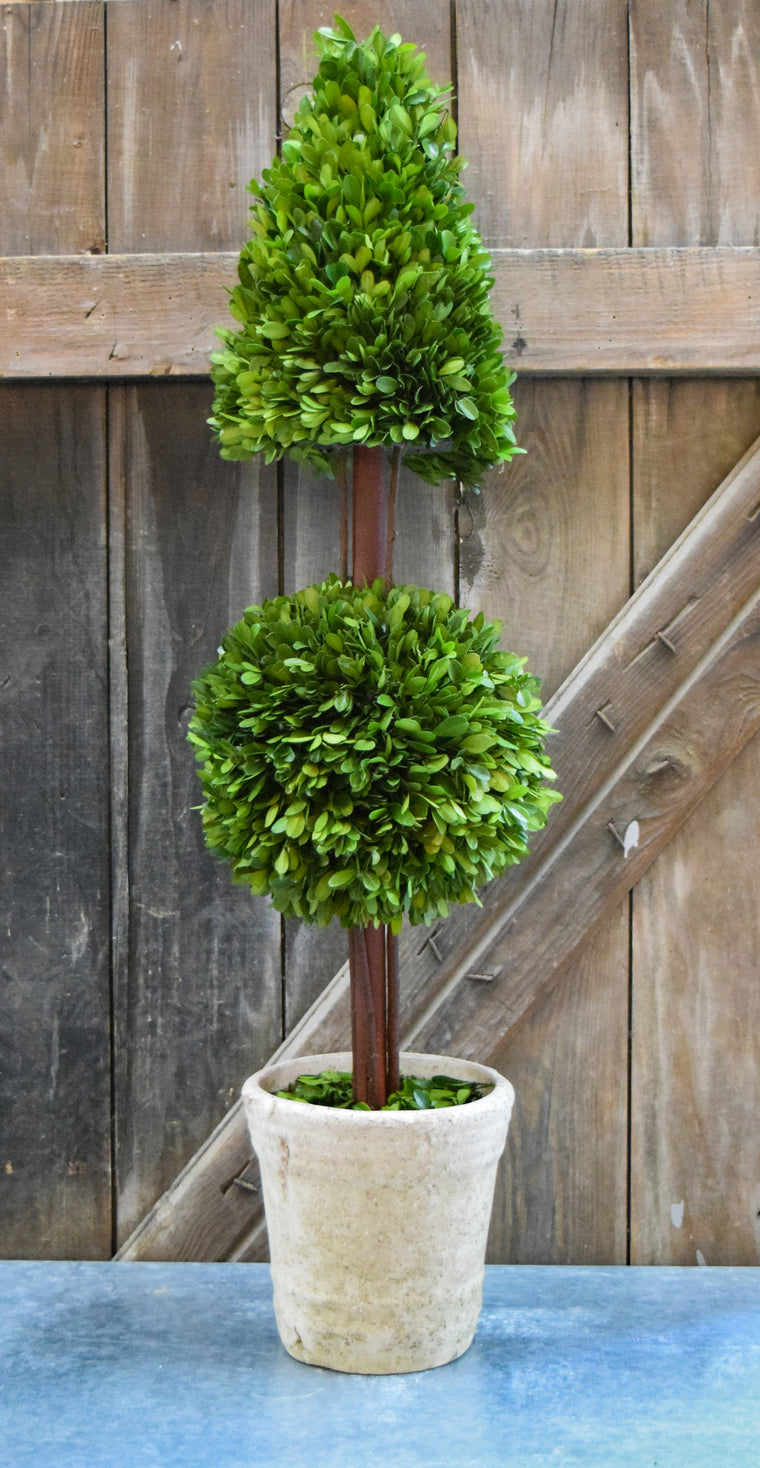 Preserved Boxwood Mixed Topiary - 36