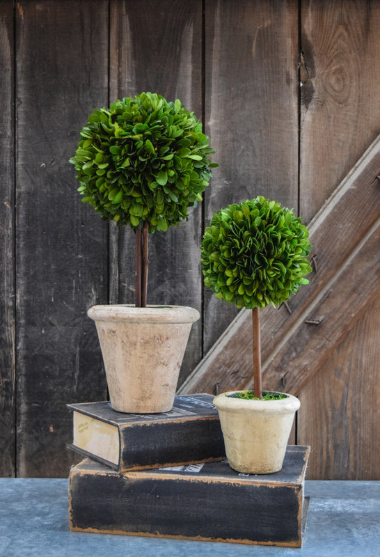 Preserved Boxwood Single Ball Topiary - 16""