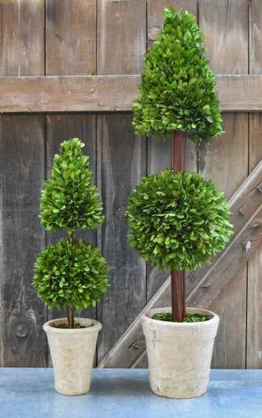 Preserved Boxwood Mixed Topiary - 24""