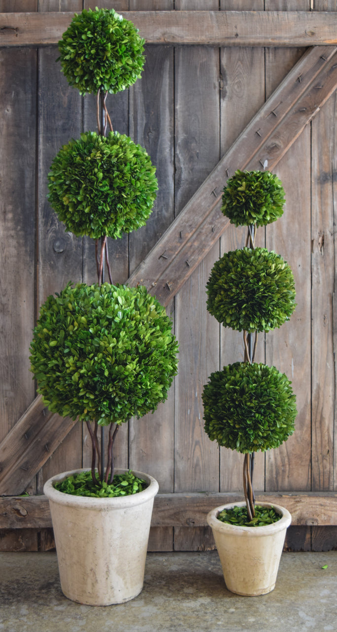 Preserved Boxwood Topiary Triple Ball 40