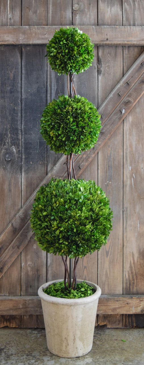 Preserved Boxwood Triple Ball Topiary - 59