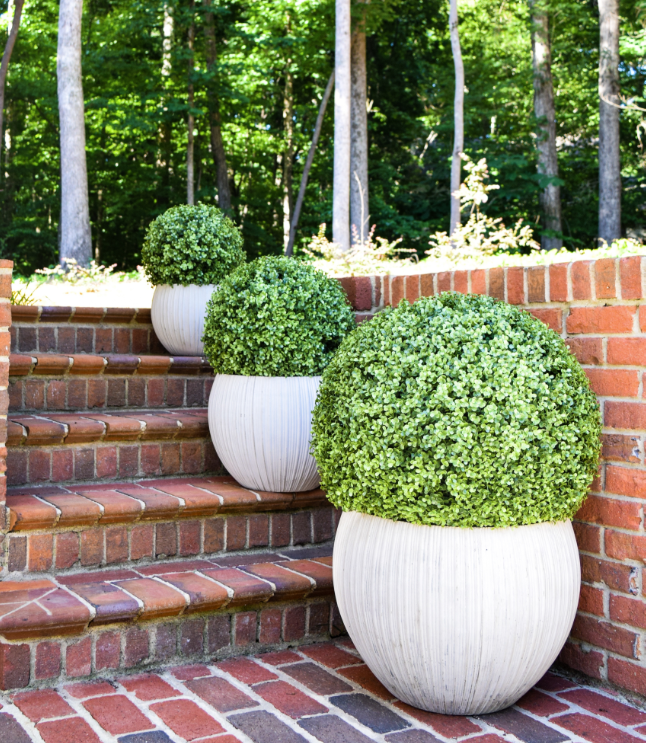 "Faux Boxwood Ball - 11""  - Set of 2 - HOME DECORATIVE ACCENTS - 3"